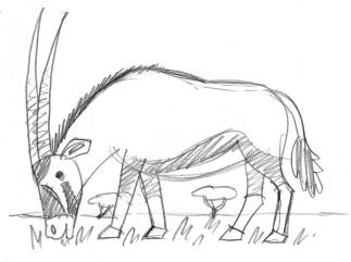 oryx6