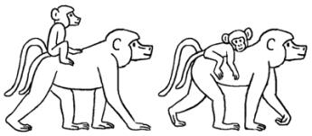 babouinspetits