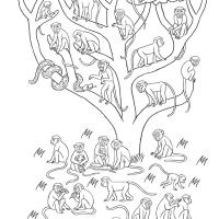 Babouins et vervets